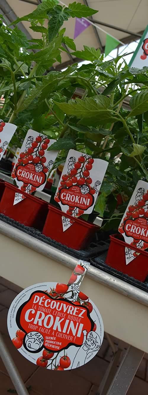 tomate_cerise_CROKINI-jardinerie-plant